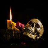 Still life skull Royalty Free Stock Image