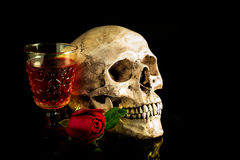 Still life skull Royalty Free Stock Image