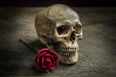 Still life skull Royalty Free Stock Images