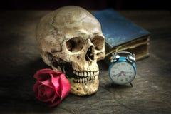 Still life skull Stock Photos