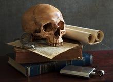 Still life skull stock photo
