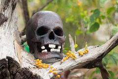 Still life, skull in the backyard and log in the park Royalty Free Stock Image