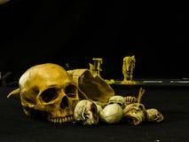 Still life with skull royalty free stock photo