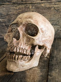 Still life skull and cigarette burned  smoke on wood. Royalty Free Stock Image