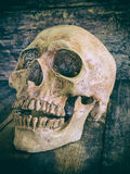 Still life skull and cigarette burned  smoke on wood. Stock Photo