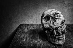 Still life skull and cigarette smoke. Stock Images