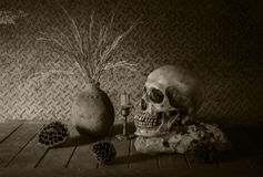 Still Life with a Skull. Stock Photos
