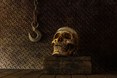Still Life with a Skull. Royalty Free Stock Photo