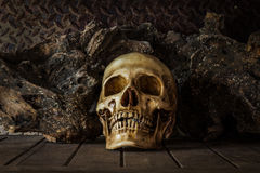 Still Life with a Skull. Royalty Free Stock Photos