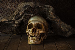 Still Life with a Skull. Royalty Free Stock Images