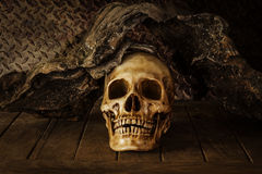 Still Life with a Skull. Stock Photography