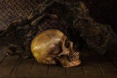 Still Life with a Skull. Stock Photos