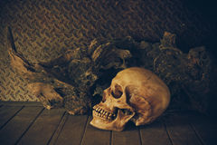 Still Life with a Skull. Royalty Free Stock Photography