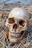 Still life with skull Stock Images