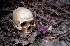 Still life with skull Royalty Free Stock Photography