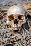 Still life with skull Stock Photos