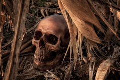 Still Life with a Skull in cornfield stock images