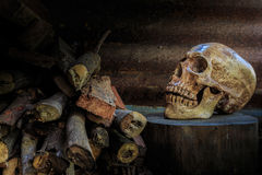 Still life skull and firewood. Still life skull, chopping block and firewood. Abstract concept When human use firewood non stop The death is comeing to stock photo