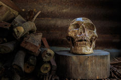 Still life skull and  firewood Royalty Free Stock Image