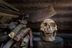 Still life skull and  firewood Royalty Free Stock Images