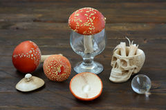 Still life with a skull and fly agaric Royalty Free Stock Image