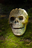 Still life with skull in the forest. Still life with scary skull head in the forest stock image