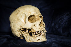 Still life skull Stock Images
