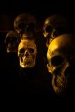 Still life skull Stock Image