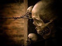 Still life skull royalty free stock photos