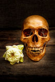 Still life with a skull human. Stock Photo