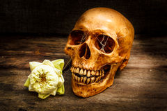 Still life with a skull human. Royalty Free Stock Photos