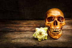 Still life with a skull human. Stock Images
