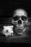 Still life with a skull human. Stock Photos