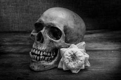 Still life with a skull human. Royalty Free Stock Photo