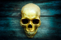 Still life with a skull human. Royalty Free Stock Images