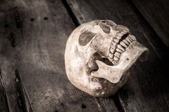 Still life with skull human Stock Photos
