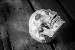 Still life with skull human Stock Image