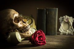 Still life skull Stock Photography