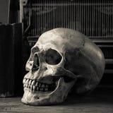 Still life skull Royalty Free Stock Photo
