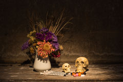 Still life skull o Stock Images