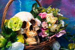 Still Life with a Skull and old Flower Stock Photos