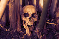 Still life with skull. Still life photography with skull, dark concept stock image