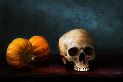 Still life skull Stock Photo