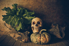 Still Life Skull and pumpkin on the timber. A symbol of Halloween royalty free stock images