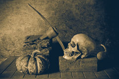 Still Life Skull and pumpkin on the timber. Stock Photo