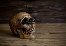 Still life.Skull resting on old wooden floor in front of a scorp Stock Photo