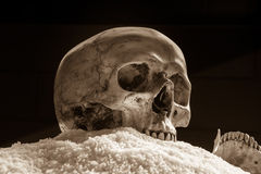 Still life skull on rice Stock Photo