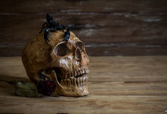 Still life.Skull and Rose periods with a scorpion on the head. Stock Photos