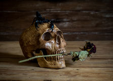 Still life.Skull and Rose periods with a scorpion on the head. Stock Images