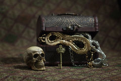 Still Life skull and small box with treasures Stock Photography